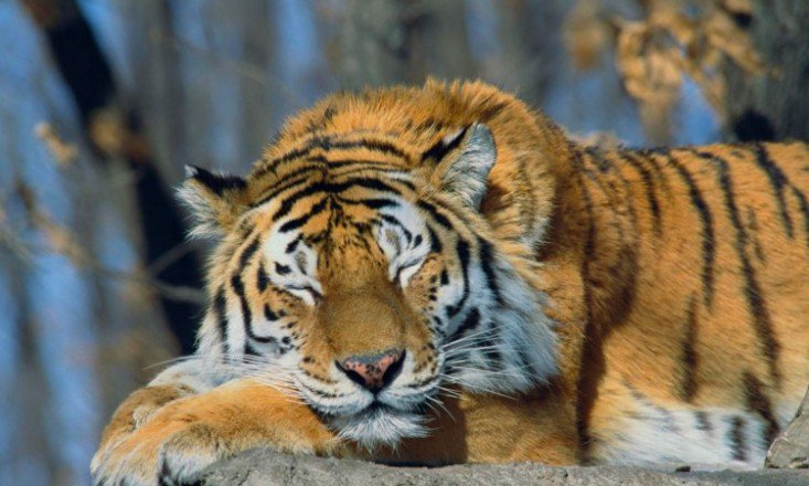 How-To-Do-The-Sleeping-Tiger-733x440