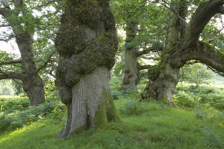 Ancient-trees-in-the-land-012